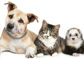 A dog, cat, and ferret on a white background